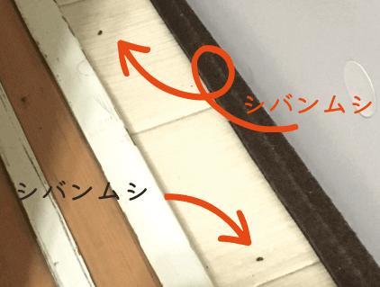 シバンムシの隠れ場所_棚の隙間1