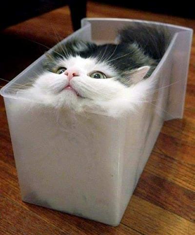 上から見ても可愛い猫その2