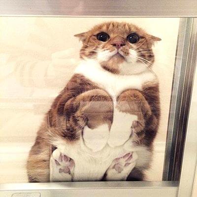 下から見てもかわいい猫その2