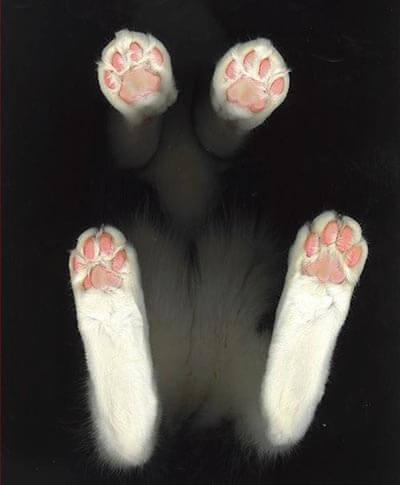 下から見てもかわいい猫その3