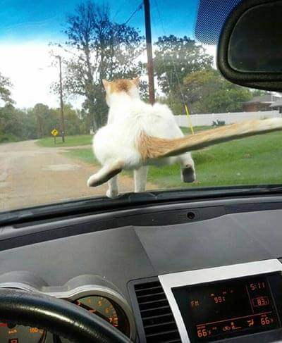 猫の魅力その7:後ろから見てもかわいい