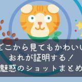 猫のかわいいキャッチ画像
