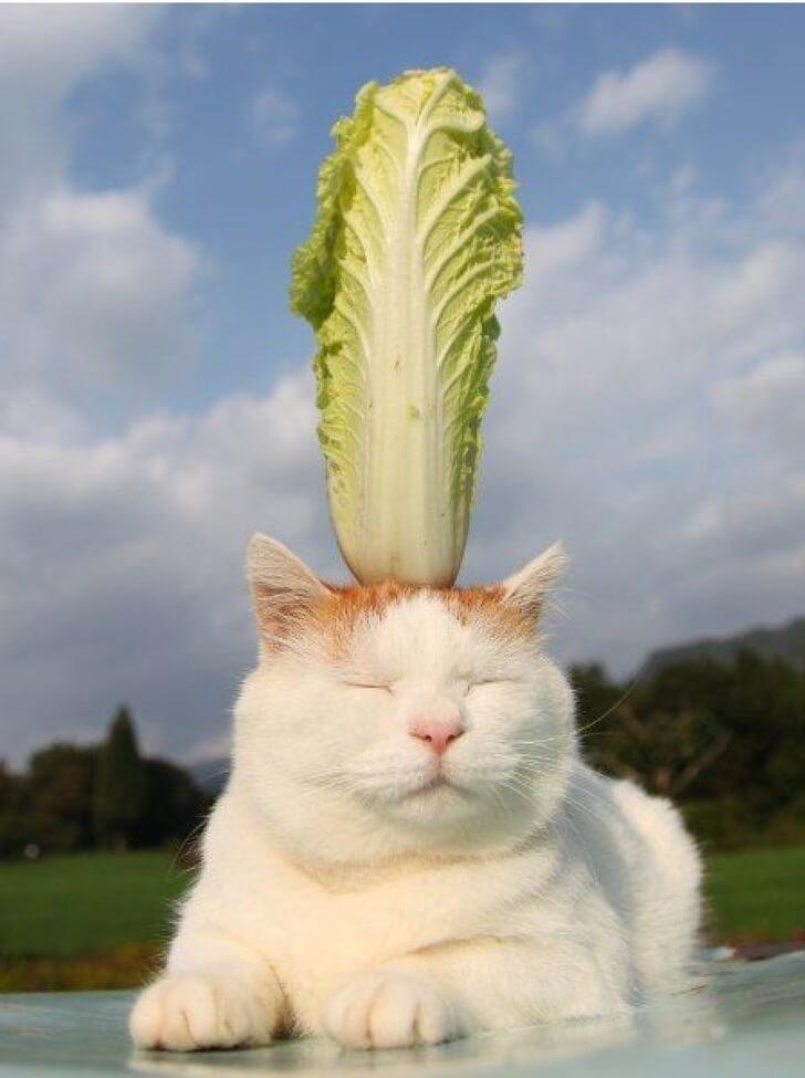 猫の魅力11:頭に野菜が乗ってる猫の画像