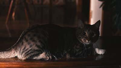 欅坂46「ヒールの高さ」MVの考察その8:猫