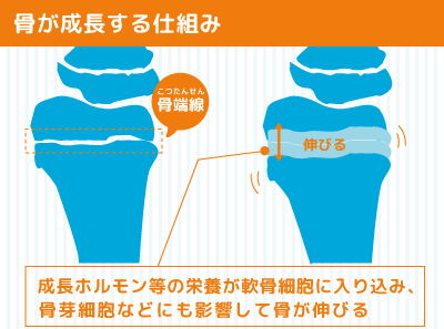 身長を伸ばすためには骨を伸ばすの図解